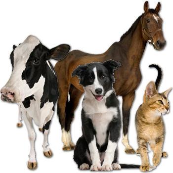 Henderson County Veterinary Hospital - Veterinarian serving Athens, TX and Anderson, Navarro, Kaufman, and other surrounding counties. - About Us